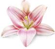 Оптимизация и продвижение студии цветов flowers-design